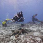 Spots plongée Bonaire avec Divi Dive