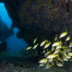 poissons Maldives Dhigurah
