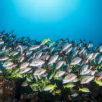 poissons colorés Maldives