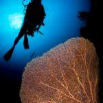 plongeur corail Maldives