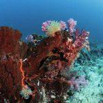 Komodo plongée sous-marine