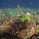 Komodo poissons colorés