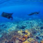 croisière plongée Komodo