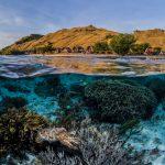 Snorkeling Komodo Spots d'Evasion