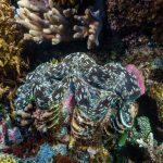 Komodo plongée Spots d'Evasion