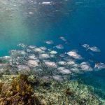 Komodo plongée Spots d'Evasion (5)