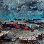 Komodo plongée