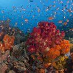 Spots Croisière Raja Ampat Spots d'Evasion