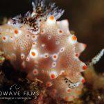 Spots Raja Ampat Mermaid Spots d'Evasion