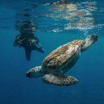 Pivo plongée avec tortue