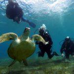 Egypte-Marsa Nakari plongée tortue