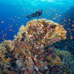 Egypte-Marsa Nakari plongée colorée