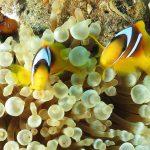 Egypte-Marsa Nakari plongée