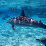Egypte-Marsa Nakari plongée dauphin