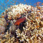Snorkeling Egypte Marsa Nakari fonds colorés