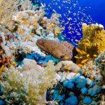 Snorkeling Egypte Marsa Nakari murène