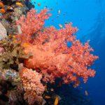 Snorkeling Egypte coraux
