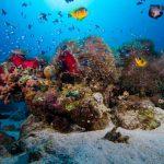 snorkeling Egypte Wadi Lahami fonds sous-marins colorés