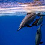 snorkeling Egypte dauphins de Sataya