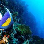 plongée Safaga poisson coloré