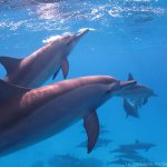 rencontre dauphins Mer Rouge