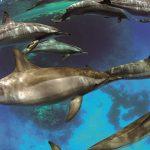 dauphins GREGORY LECOEUR