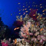 récif coloré marsa shagra