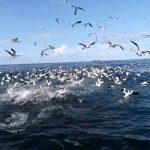 Fonds Marin Croisière SeaWolf Plongée Malpelo