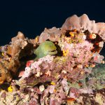 Fonds Marins Croisière SeaWolf Plongée Malpelo